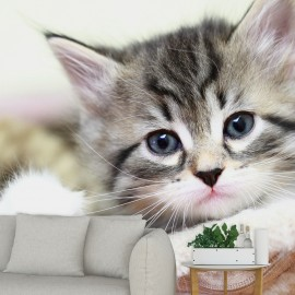 Fotomural Gato Pequeño