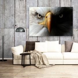 Fotomural de Águila